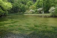 奥日光 蓼ノ湖 - photograph3