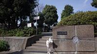 Vol.1206 三ツ沢上町公園 - 小太郎の白っぽい世界