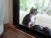 となりの猫は涼しい所を知っている - ピースケさんのお留守ばん