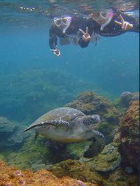 ファンでダイナミックアーチ&体験でもカメ! - 八丈島ダイビングサービス カナロアへようこそ!