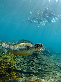 仲良し女子、サンゴ礁でカメを追う♪ - 八丈島ダイビングサービス カナロアへようこそ!