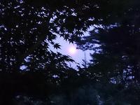 マフィン作りとかーちゃんの呟き(●^o^●) - 浅間山眺めてほのぼのlife~花だより♪