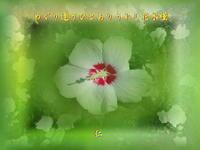 『 めぐり逢うひとありうれし花木槿 』つれづれ575qs1010 - 老仁のハッピーライフ