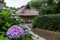 水車小屋と紫陽花 - あだっちゃんの花鳥風月