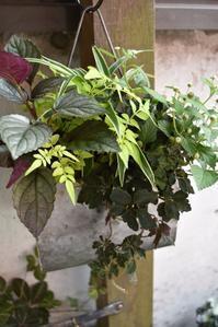 カラーリーフの寄せ植え - 小さな庭 2