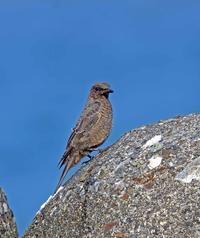 21017年 7月 野鳥 - マルパパ釣行記