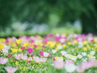 新宿御苑 夏の花を求めて - 光の音色を聞きながら Ⅱ