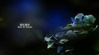 紫陽花の彩 VOL.04 終章 - 君に届け