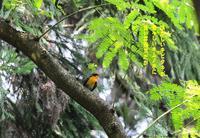 変った鳥が迷って来ないかな~~ - Weblog : ちー3歩