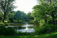猛暑なのに涼しげな中島公園~後編 - 柳に雪折れなし!Ⅱ