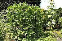 家庭菜園 - 私の息抜き(^o^)