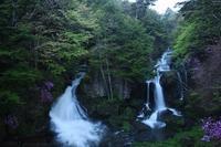 奥日光 竜頭の滝 トウゴクミツバツツジ 1 - photograph3