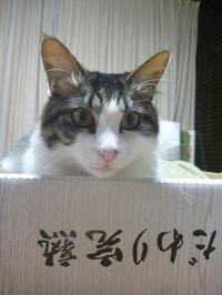 7/11(火) - アメタロウ・ダイアリー