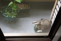 最近の猫事情28 - 鳥会えず猫生活