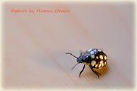 遊歩道お散歩中に見つけた昆虫さん - ひとみの興味津々でございます!日々のブログ