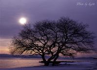 湖畔の朝 - 癒しの空間