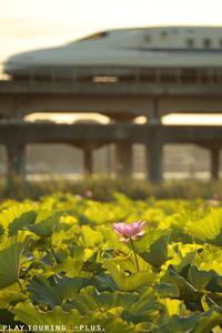 朝の花 - PTT+.