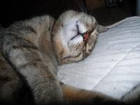 トラ猫もも ~枕大好き~ - カフェ・スナック あや
