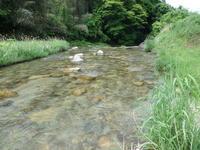 今日は足助川へ - 加茂のトンボ (トンボ狂会)