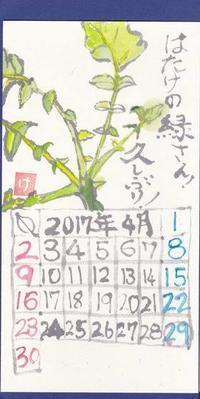 古川 2017年4月 「はたけの緑さん」 - ムッチャンの絵手紙日記