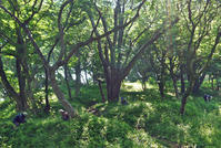 7・15六国見山7月定例手入れは夏季対応で1時間短縮 - 北鎌倉湧水ネットワーク