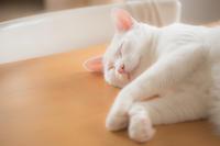 朝食の横で… - Omoブログ