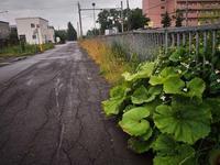 7月11日 今日の写真 - ainosatoブログ02