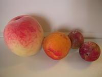 桃と杏と李(庄田) - 柚の森の仲間たち