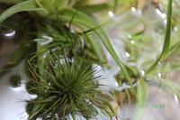 ソーキング - CHIROのお庭しごと
