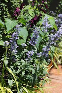 CHIRO庭、夏の色彩 - CHIROのお庭しごと