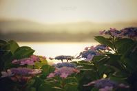 紫陽花と海 - GreenLife