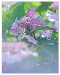 雨上がり。。 - Yuruyuru Photograph