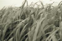 landscape - larywa