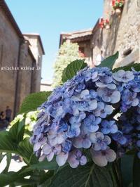 チヴィタ・ディ・バニョレ―ジョの紫陽花♫ - アリスのトリップ