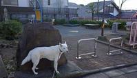 Vol.1207 下田町杉並公園 - 小太郎の白っぽい世界