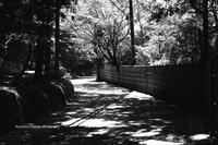 北鎌倉の道あれやこれや - くにちゃん3@撮影散歩