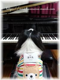 ピアノ教室☆勉強会茶々丸レポ☆「好き」を作る - ☆ドルチェだいあり~☆。・:*:・゚'