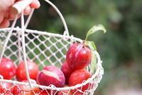 庭の赤い宝石\(^o^)/ - 『小さなお菓子屋さん keimin 』の焼き焼き毎日