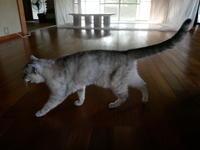 モン様、特別待遇で元氣回復 - ご機嫌元氣 猫の森公式ブログ