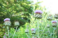 今年の夏もワクワクの種をまきたい。 - a piece of dream* 植物とDIYと。