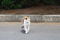 史跡・江川邸の駐車場で三毛猫 - Meenaの日記