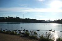 白鳥の湖 - 一瞬をみつめて