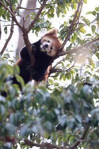 7月13日(木) 梅雨バテ - ほのぼの動物写真日記