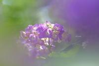pretty hydrangea - like a rabbit ~ なんとなく、lonely?