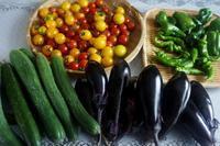 ■MYファーム昨日の収穫品です♪ - 「料理と趣味の部屋」