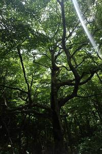 広島県民の森より毛無山へ - ずんどこどっこいしょ