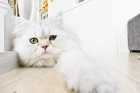 ✿猫カフェ MoCHA - happiness