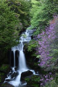 奥日光 竜頭の滝 トウゴクミツバツツジ 2 - photograph3