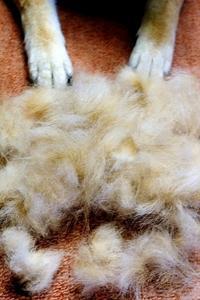 羊の毛刈り - 写心食堂