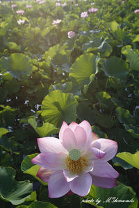在庫漁り - 雅郎の花鳥風月